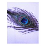 Purple Peacock Feather Postcards