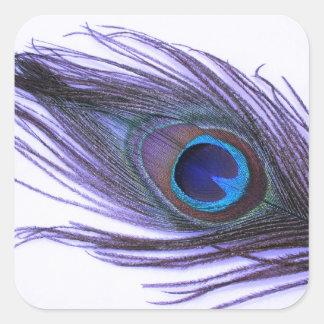 Purple Peacock Feather Square Sticker