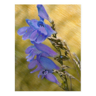 Purple Penstemon Mixed Media Drawing Postcards