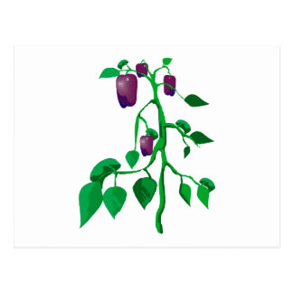 Purple peppers on green plant graphic postcard