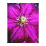purple perfect stretched canvas prints