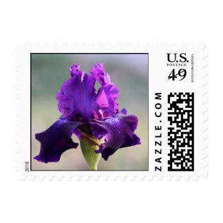 """Purple Perfection"" Iris Photography Postage"