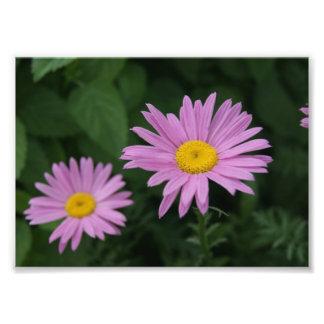 Purple Petals 5x7 Photographic Print