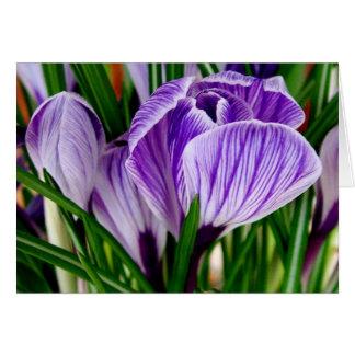 Purple Petals Crocus Flower Card