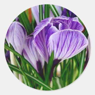 Purple Petals Crocus Flower Classic Round Sticker