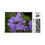 Purple Petals Stamp