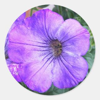 Purple Petunia Classic Round Sticker