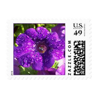 Purple Petunia Flower Postage