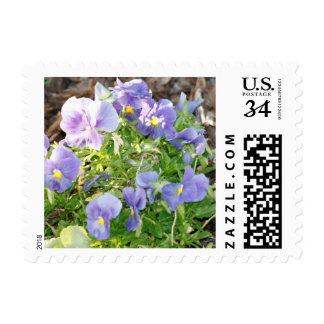 Purple Petunia Flowers Postage Stamps