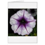 Purple Petunia Greeting Cards