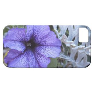 Purple Petunia N Dusty Miller iPhone 5 Case