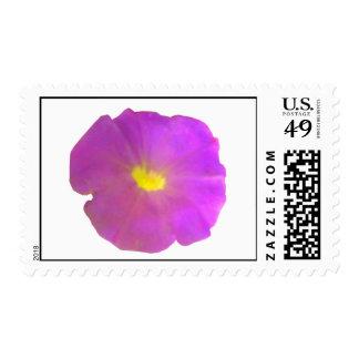 Purple Petunia Postage Stamp