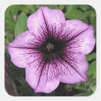 Purple Petunia Square Sticker
