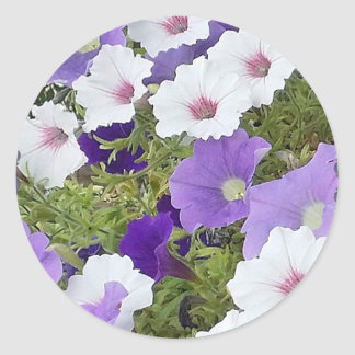 Purple Petunias - Classic Round Sticker, Glossy Classic Round Sticker