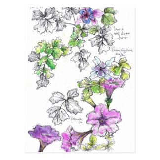 Purple Petunias Pen and Ink Flower Sketch Postcard
