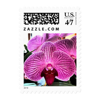 Purple Phalaenopsis Orchid Floral Postage Stamps