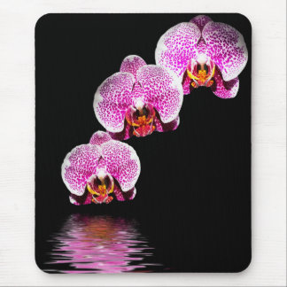 Purple Phalaenopsis Orchids Reflections Mousepad