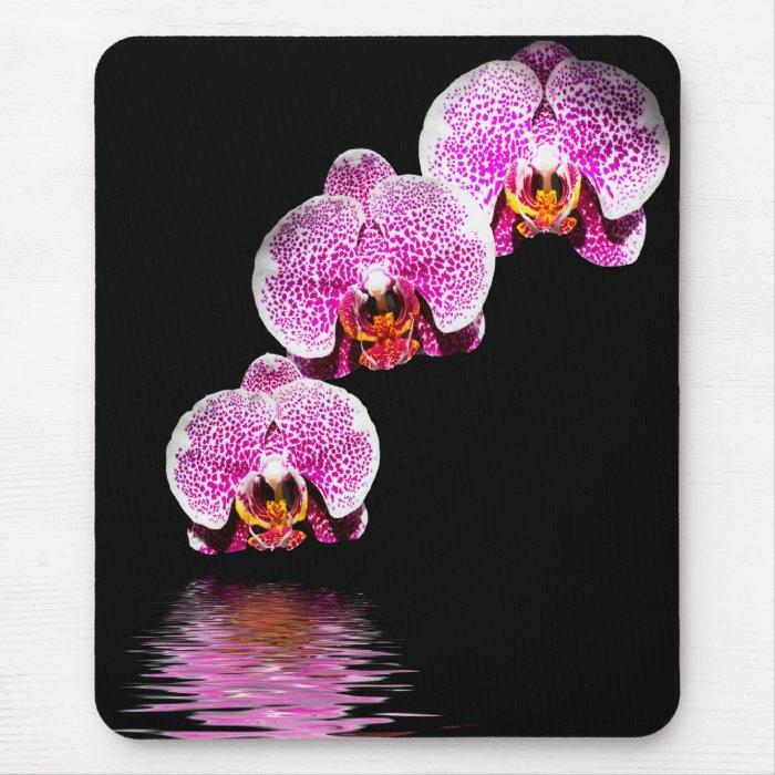 Purple Phalaenopsis Orchids Reflections Mousepad