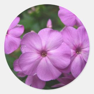 Purple Phlox Flowers Round Stickers