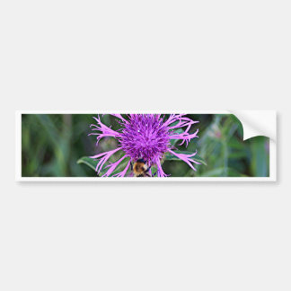 Purple pink flower and bee car bumper sticker