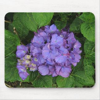 Purple pink hydrangea flower in bloom 2 mouse pad