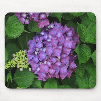 Purple pink hydrangea flower in bloom mouse pad