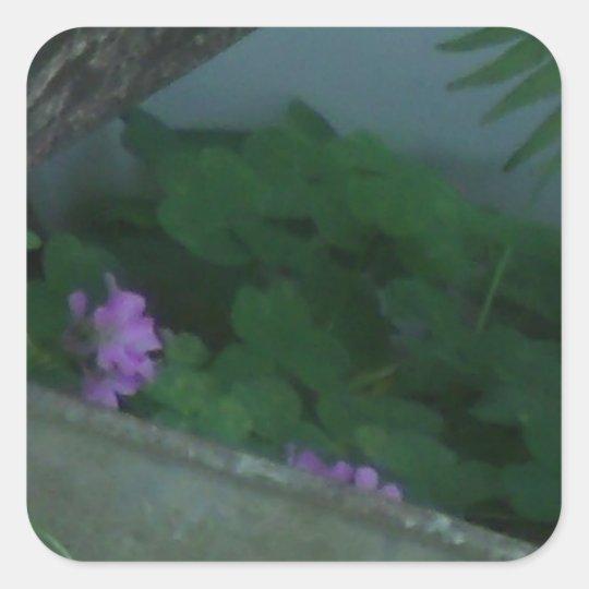 Purple Pink Shamrock Clover Flowers Square Sticker