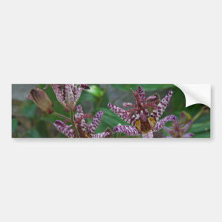 Purple pink white striped orchid like flower lilly bumper sticker