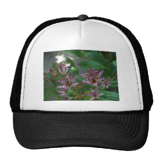 Purple pink white striped orchid like flower lilly trucker hat
