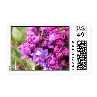 Purple Pink wildflowers Stamp