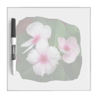 Purple Pinwheel Flowers Photograph Dry-Erase Whiteboard