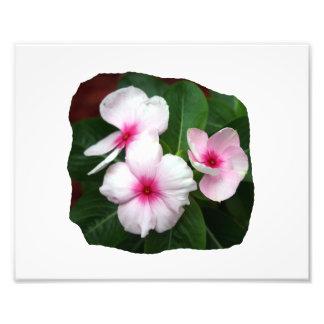 Purple Pinwheel Flowers Photograph