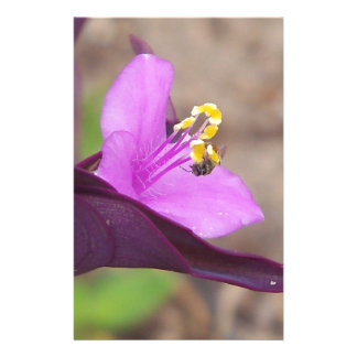 purple plant called spiderwort and a tiny bee stationery