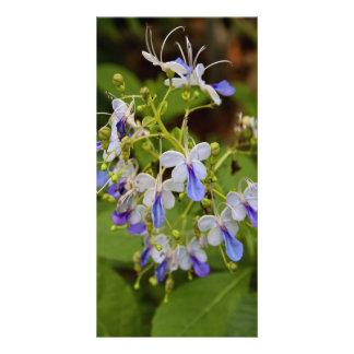 Purple Plant Photocard Card