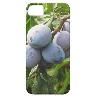 Purple plums hanging on the tree . Tuscany, Italy iPhone SE/5/5s Case