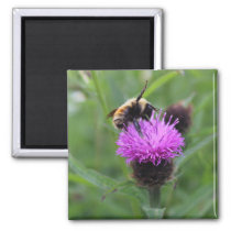 Purple Pollen Magnet