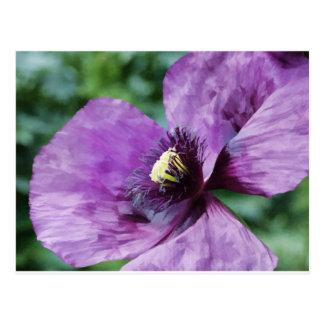 Purple Poppies / Violet Postcard