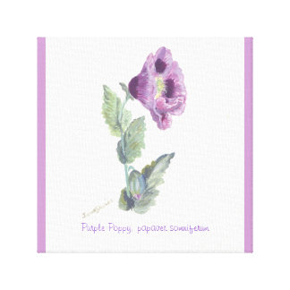 Purple Poppy, papaver somniferum by janet davies Canvas Print