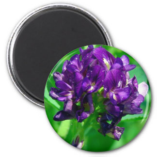 Purple Prairie Alfalfa Magnet