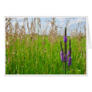 Purple Prairie Flower Greeting Card