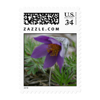 Purple prairie pasque North and South Dakota state Postage