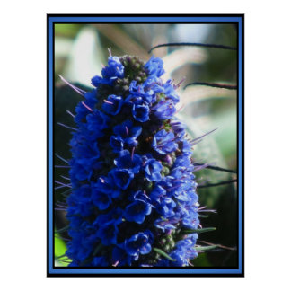 Purple Pride of Madeira Poster