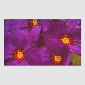 Purple Primula Flowers Rectangular Stickers