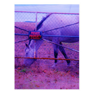 Purple Private Property Horse Postcard
