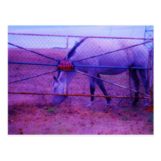 Purple Private Property Horse Postcard