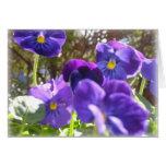 Purple Prose Cards