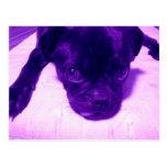 Purple Pug Post Card
