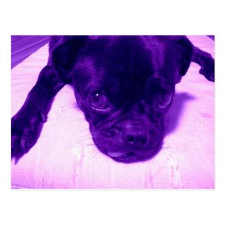 Purple Pug Postcard