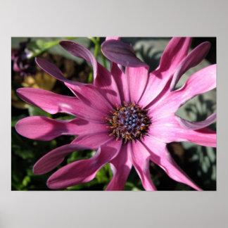 Purple Rain Daisy Print