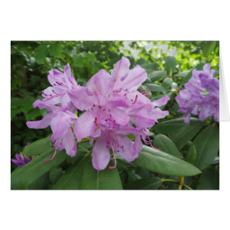 Purple Rhododendron flowers Card